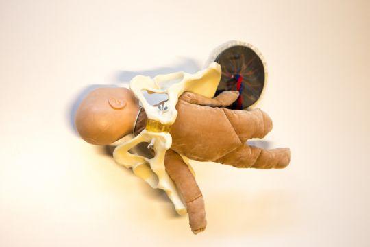Anatomisch bekken met pop